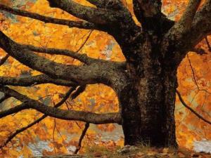arbre-automne