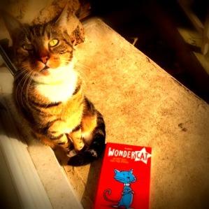 audren-super-cat